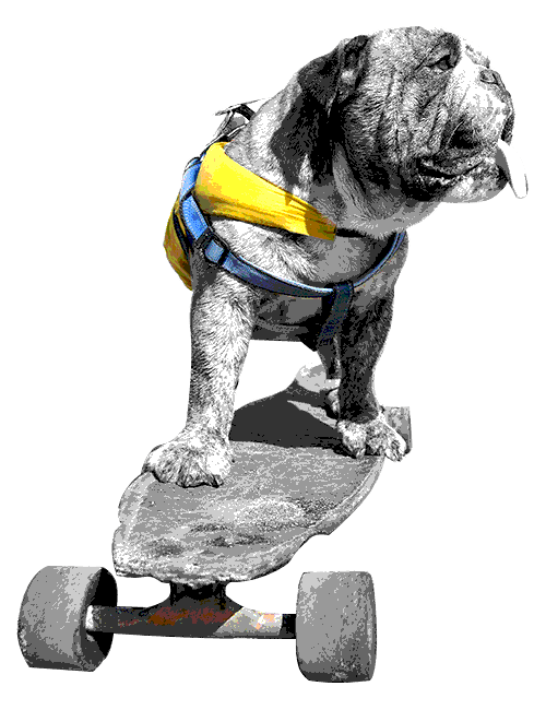 Image of a dog riding a skateboard with a grainy texture